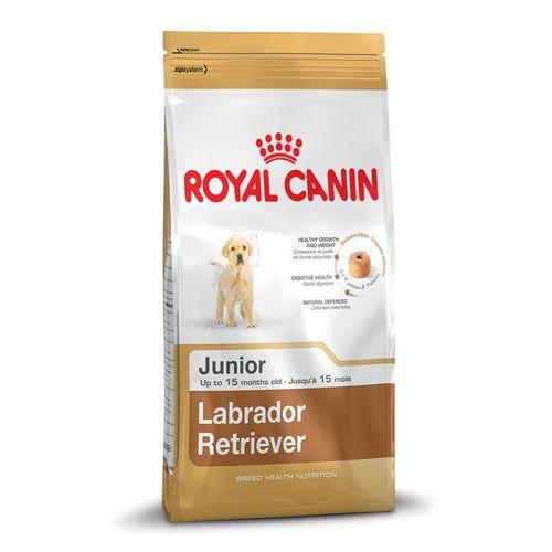 Labrador-Retriever-Junior-Kg