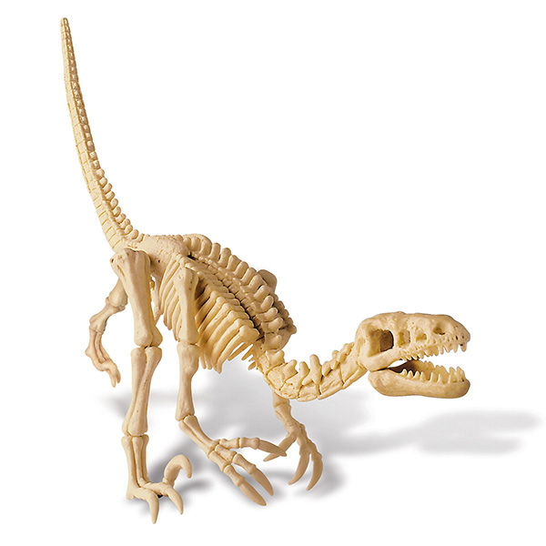4M-Dinosaur Velociraptor Skeleton-Science Toy